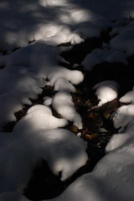 雪の上に落ちる木漏れ日