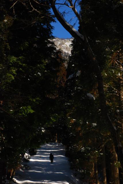 雪の林道_杉林の上に山頂が見える