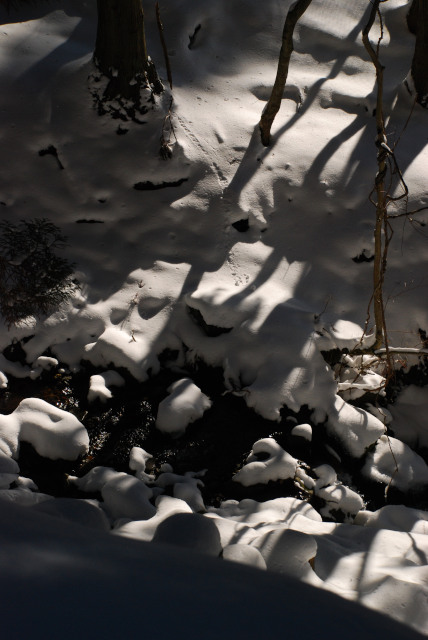 千種川の源流の沢