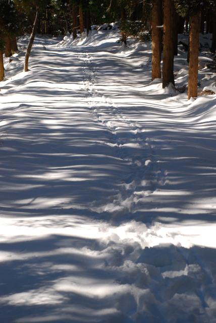 雪の積もった林道に続く自分の足跡