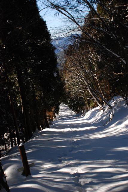 雪の林道が続く