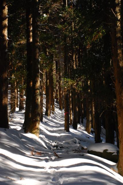 樹林帯の登山道