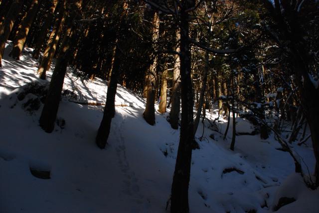 雪の尾根を強引に登る