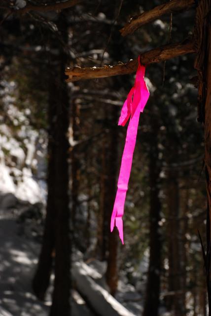 枝に付けられたピンク色のリード