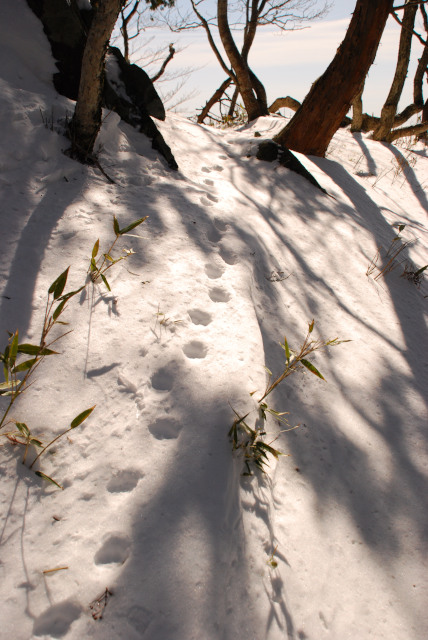 雪の上に小さな足跡