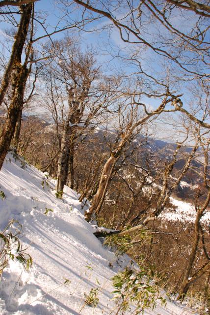 笹原の上は雪が深い