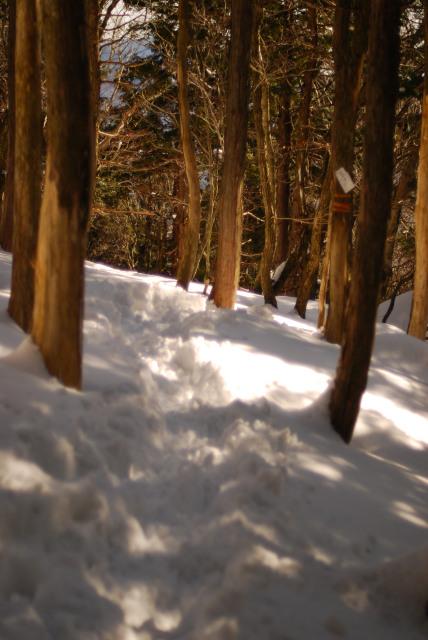 下りの登山道