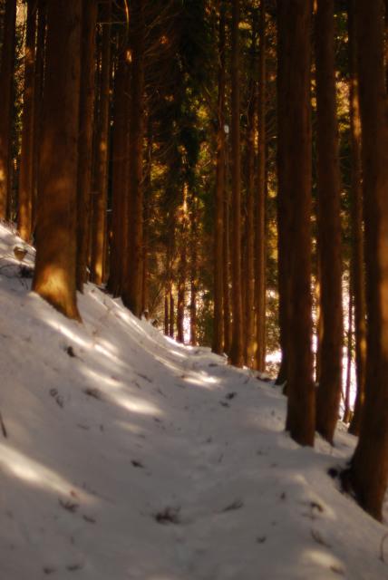 杉林の道を下る