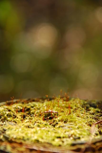 切株の上に苔の花