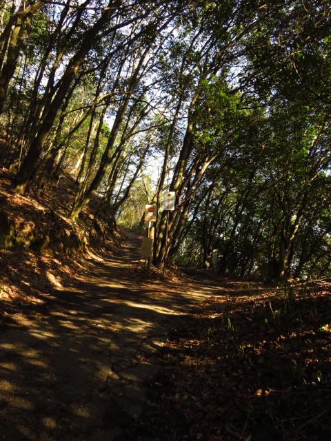 矢田山遊びの森_ハイキングコース