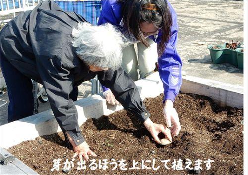 20160211 戸田川 じゃが芋植えた3