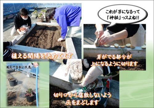 20160211 戸田川 じゃが芋植えた1