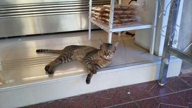 民主記念塔界隈 cat(1)