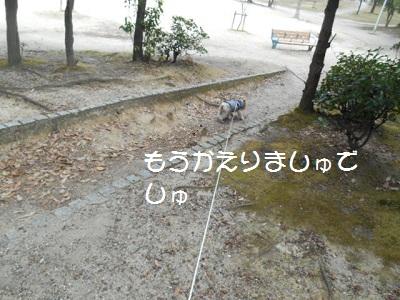 DSCN8379.jpg
