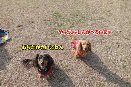 DSC07030_20151230175312b24.jpg