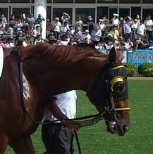 ブリンカー着用馬