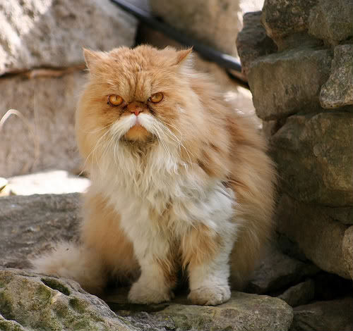 30-hysterically-hip-cats-with-mustaches-24.jpg