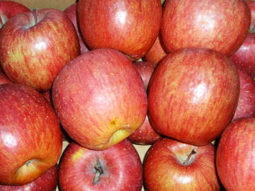 applel2.jpg