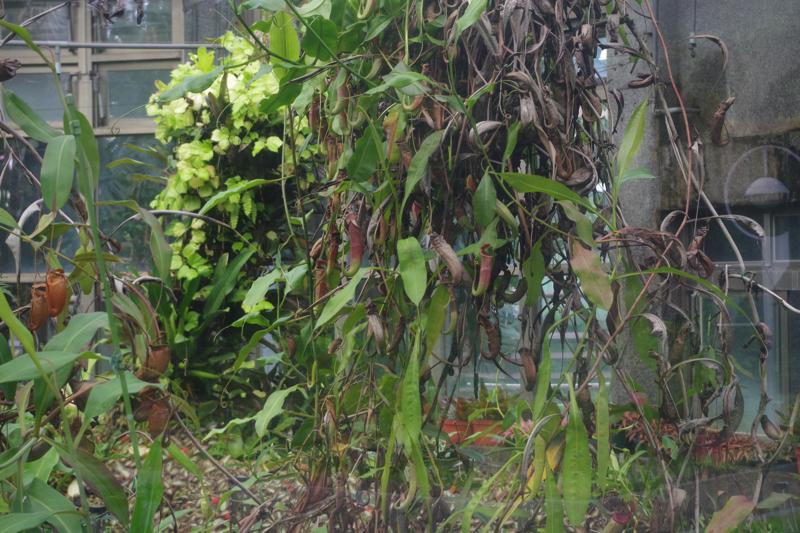 Taipei_Botanical_Garden_081215_4.jpg