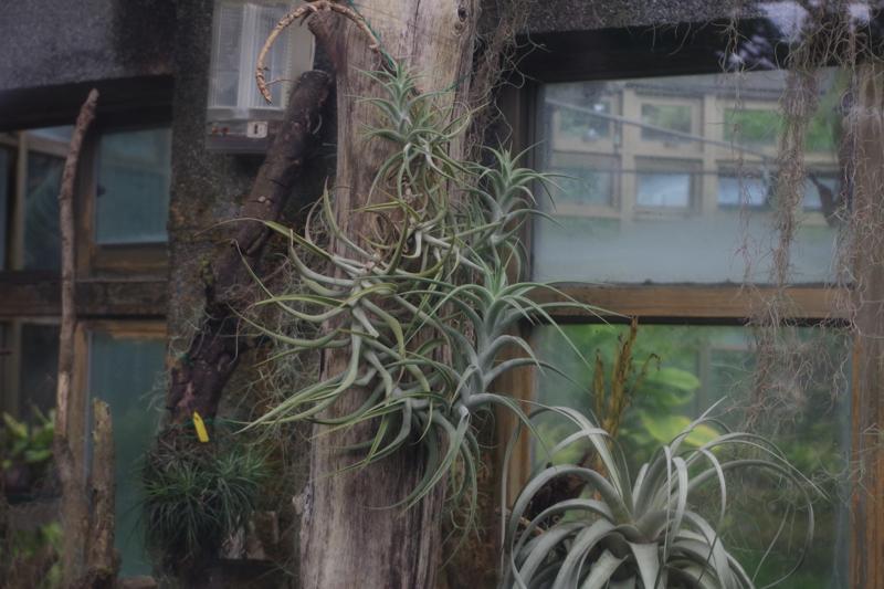 Taipei_Botanical_Garden_081215_5.jpg
