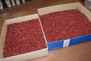 160130小豆1