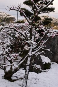 160207今朝の雪