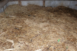 150214温度計をさしてある堆肥