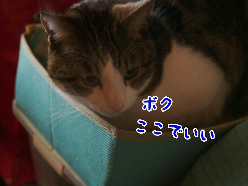 fc2_2016-01-17_13-01-15-121.jpg