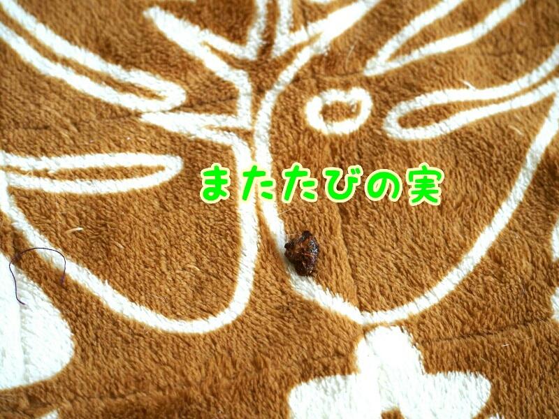 fc2_2016-01-18_13-07-44-225.jpg