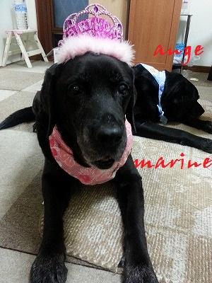 marine20140620.jpg