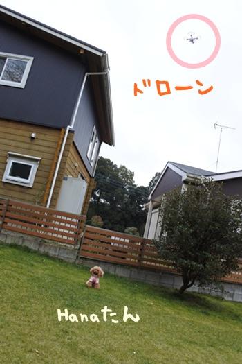 DSC_6211.jpg