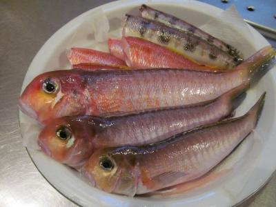 今日の魚1