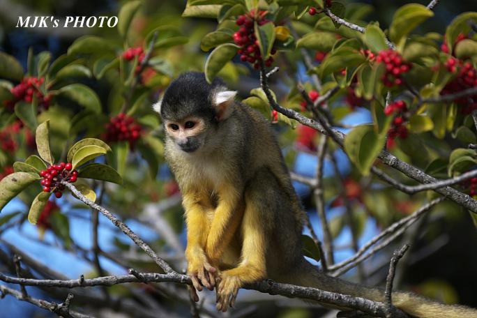 monkey5840.jpg