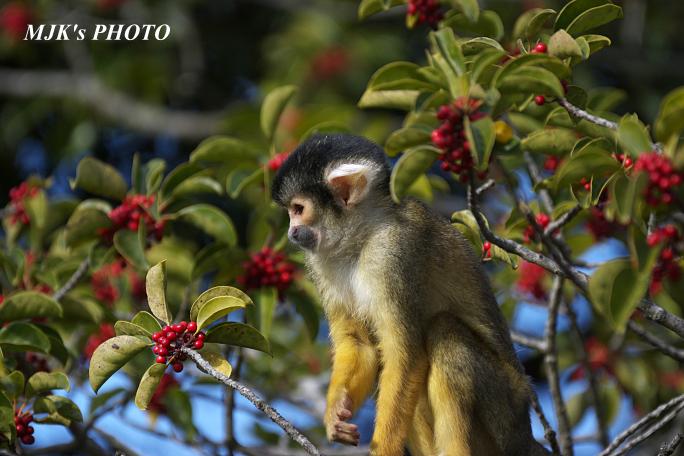 monkey5841.jpg