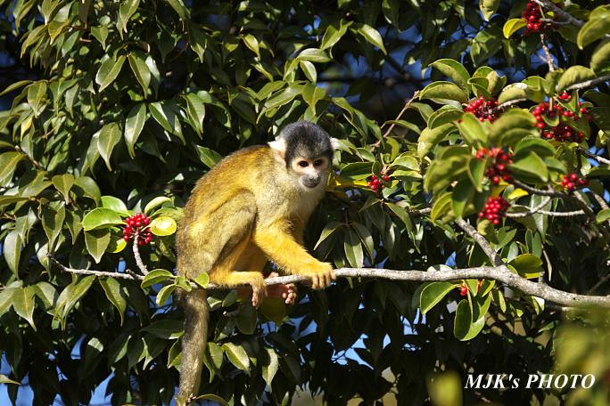 monkey5843.jpg