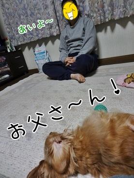 kinako3882.jpg