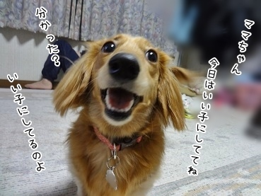 kinako3894.jpg