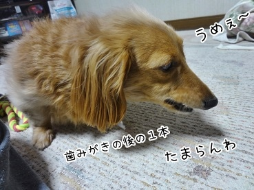 kinako3915.jpg