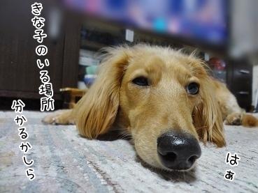 kinako3922.jpg