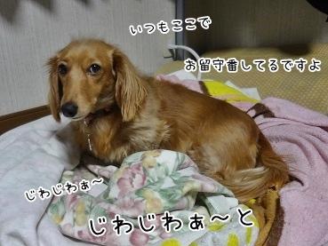 kinako3959.jpg