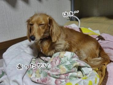 kinako3960.jpg
