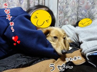 kinako3964.jpg
