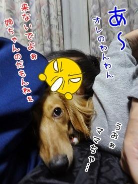 kinako3967.jpg
