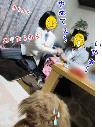kinako4007.jpg