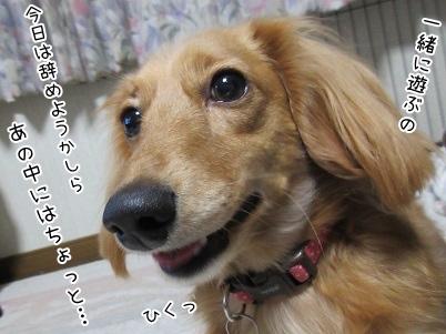 kinako4008.jpg