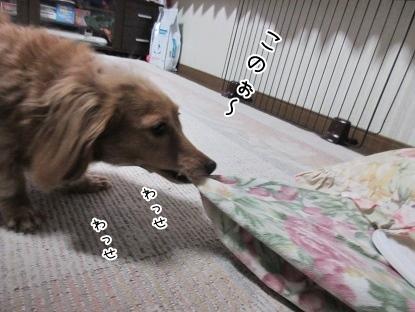 kinako4041.jpg