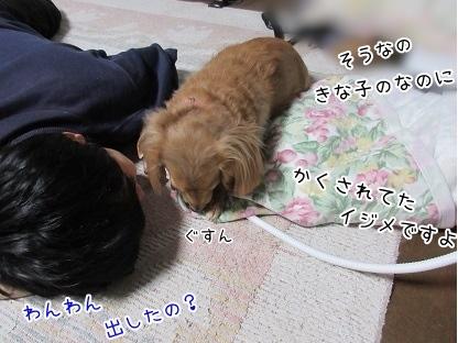 kinako4042.jpg