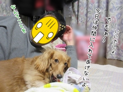 kinako4047.jpg