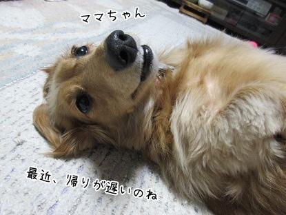 kinako4096.jpg