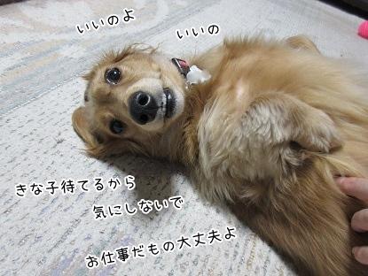 kinako4098.jpg